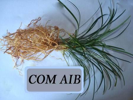 01g hormônio enraizador para plantas ácido indolbutírico aib
