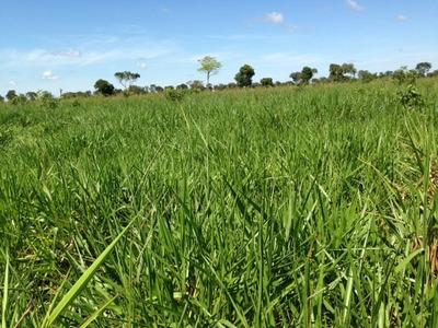 Fazenda Em Cocalinho - Mt Com 47.792 Ha