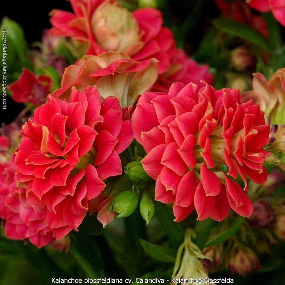 plantas de jardim mercadolivre ? Doitri.com
